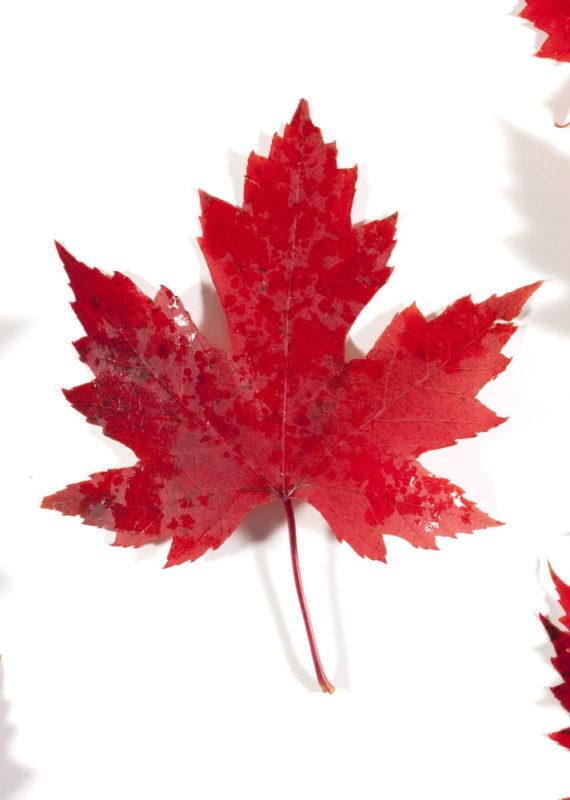 PVT Canada : comment l'obtenir ?