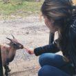 Faire des câlin aux wapitis au Parc Oméga